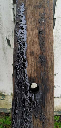 Wood tar on Keruing arms wood off an old telegraph pole.
